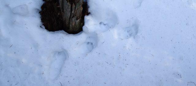 Snow-tracking in Romania