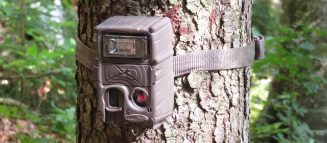 Six-month report on camera trapping in Croatia