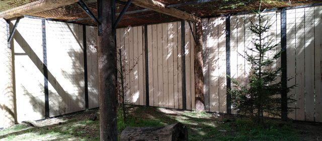 Lynx enclosure is ready!