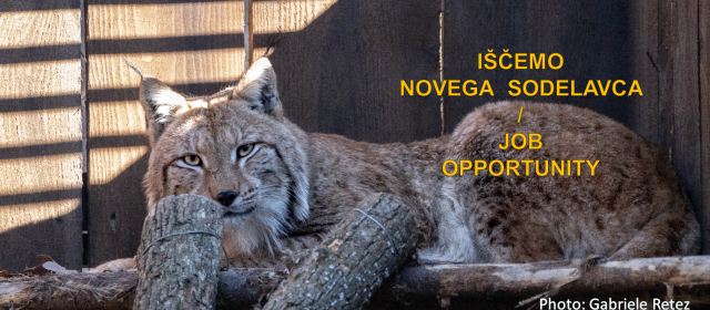 Iščemo sodelavca za delovno mesto na projektu LIFE Lynx