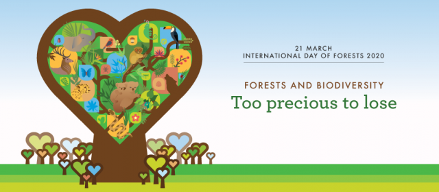 Today we celebrate the International Day of Forests