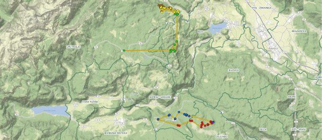 Primi dati sulle linci rilasciati nelle Alpi sud-orientali in Slovenia