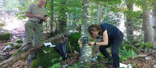 Into the new season of camera trapping in Slovenia